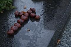 IMGP6157 (hlavaty85) Tags: chestnut cross kaštany kříž hřbitov
