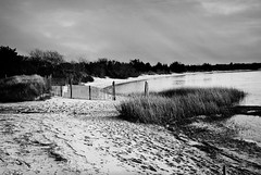 R3-042-19A (David Swift Photography) Tags: davidswiftphotography newjersey oceancity beaches bay inlet water dunes duneforest sand dunegrass dunefence footprints seashore scenic ilfordxp2 film 35mm leicaminilux capemaycounty