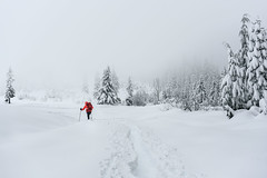 Onward (garshna) Tags: snowshoeing trees red fog atmosphere snowshoer backpack nature environment washingtonstate