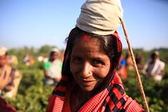 C1_2016-161391 (HamimCHOWDHURY  [Read my profile before you fol) Tags: teagardenportrait girlnature tealeaf workingwomen