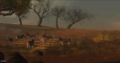 Devin2 - Wildlife (AtlanBade) Tags: wildlife devin2 elephant zebra afrika