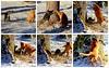 Giacomo und Leoni (Mumes World) Tags: katzen spiel winter