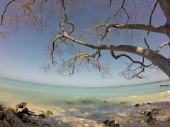 ida.. (BipolArt ☾ Séptimo Arte) Tags: baru agua arena arbol