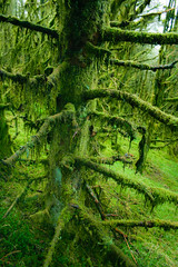 Moss Attack (Costigano) Tags: moss forest woods woodland green tree outdoor nature canon eos blackstairsmountains republicofireland ireland eire
