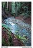 Muir Woods #1 (gardnerphotos.com) Tags: muirwoods gardnerphotoscom california redwoods coastalredwoods hwy1 highway1 route1