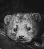 _TL60497 (5816OL) Tags: zoos dad zoo2016