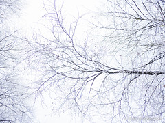 P1180003-2.jpg (loenatik) Tags: assel gelderland kootwijk nature nederland radiokootwijk sneeuw snow tree winter sky