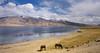 Tso Moriri, India 2016 (reurinkjan) Tags: india 2016 ©janreurink himachalpradesh spiti kinaur ladakh jammuandkashmir kargil tsomoriri lakemoriri tsomoririwetlandconservationreserve changthangplateau himalayamountains himalayamtrange himalayas landscapepicture landscape landscapescenery mountainlandscape