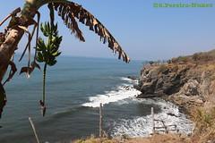 The Sea Walls go bananas... El Salvador (ssspnnn) Tags: banana banano cambur guineo bananas cachodebanana racimodebanana canoneos70d elsalvador praia playa beach seashore fruta fruit musaceae musaacuminata musaparadisiaca spnunes snunes nunes spereiranunes