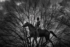 Into the Woods (herschel42) Tags: dc branches monochrome horse statue horseback silhouette