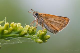 Butterfly @ 105mm