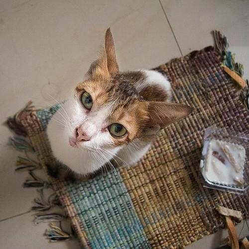 Feline guest - 3