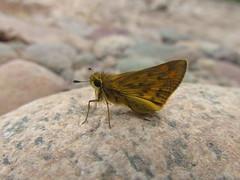 IMG_9386 (alfacentauri77) Tags: life flower color green bird flor frog caterpillar libelula vida araa botanica oruga