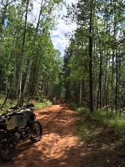 Ride through Zuni Mountains, August 2015 (tomman) Tags: newmexico tree forest landscape adventure bmw motorcycle gs adv motorrad f800 advrider f800gsa