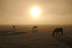 Horses (AIIex) Tags: horse landscape nikon alba sigma linux opensource cavalli cavallo paesaggio montisibillini sigma1020 castellucciodinorcia piangrande nikon90 darktable