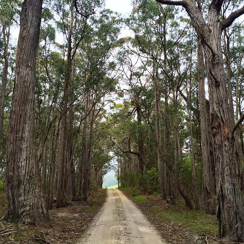 The road to 'Banyula'.