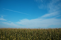 corn and sky (flegontovna) Tags: sky lake tractor reflection nature water netherlands fog landscape bush pipe spiderweb friesland plantlife specland
