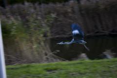 Floriade_251015_12 (Bellcaunion) Tags: park autumn fall nature zoetermeer rokkeveen florapark