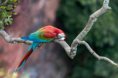 Burst of colour (tmeallen) Tags: brazil giant branch crater jardim colourful sinkhole pantanal matogrossodosul redandgreenmacaw doline arachloropterus
