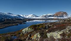 Where autumn meets winter... (bent inge) Tags: autumn snow fall norway october hiking telemark haukeli 2015 outdooractivities vinje haukelifjell