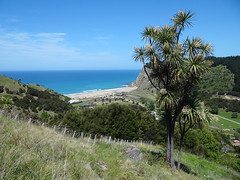 Waipatiki 2 (Home Land & Sea) Tags: newzealand track lookout nz cabbagetree pointshoot sonycybershot hawkesbay sooc waipatikibeach homelandsea dschx100v