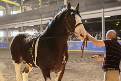 RAWF15 JSteadman 0106 (RoyalPhotographyTeam) Tags: sun royal 2015 rawf nov08