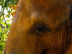 Elephant Remembers (J.T. Lindroos) Tags: elephant lumix zoo louisville louisvillezoo panasoniclumix fz70 dmcfz70