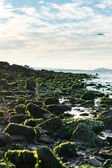 Clams Squirting at Low Tide (The Greggest) Tags: bridge seaweed bay tide low clams squirting