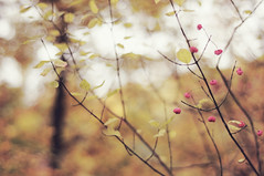 HBW! :) (Frau Koriander) Tags: autumn winter fall nature fauna 50mm flora dof bokeh branches herbst natur pflanzen darmstadt pfaffenhütchen hbw happybokehwednesday autumnloveaction nikond300s kranichsteinerwald