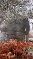 PC185478 (Art & Nice) Tags: fontainebleau gorge franchard rocher champignon mousse lichen arbre souche elephant olympus xz1