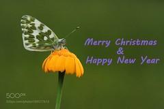 Merry Christmas (sergeyashin) Tags: ifttt 500px beauty color flower light turkey summer photo black photos photoshop photographer h antalya kumluca finike necdet yasar