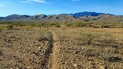 20161210_090555~2 (Ryan/PHX) Tags: trailrunning bct blackcanyontrail arizona desert outdoors ultrarunning aravaiparunning