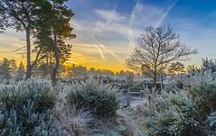 Frosty Path (nicklucas2) Tags: frost gorse winter sunrise sun path gate landscape