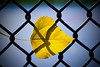 Fence shadows (vinnie saxon) Tags: hff fence leaf fall autumn yellow nature season bokeh urban macro nikoniste nikon d600 shadow detail