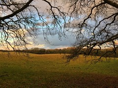 Hangers Way (Marc Sayce) Tags: tree fields clouds hartley mauditt worldham hampshire south downs national park hangers way winter january 2017