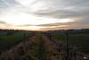 Pfad / path (svensonkra26) Tags: sonnenuntergang pfad weite flur