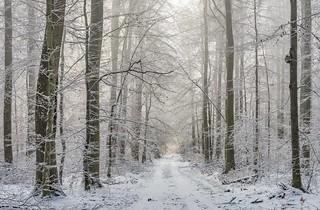*Eifel-Winter*