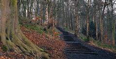 71 Steps, by David Nash (littlestschnauzer) Tags: ysp yorkshire sculpture park david nash art artist 2010 uk parkland steps 71 winter january 2017 wintry trees bare natur nature woodland woods path pathway