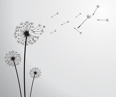 vector dandelion (khanh4mat) Tags: dandelion flower anniversary background biology blossom botany card celebration christmas delicate float fluff fluffy flying fragile gift grass green growth head holiday human illustration life light loss natural nature offspring overblown parsley pistil plant posterity scene seeds sky softness stem summer text tranquil valentine vector weed serbia