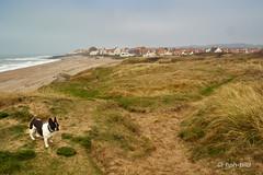 Audresselles -  Dunes