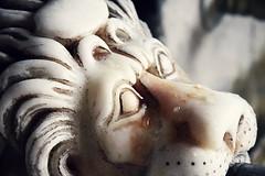 Arslanlar da ağlar! - Lions also cry! (halukderinöz) Tags: arslan lion çeşme fountain eski old tarihi historic pir wise ev house hacıbektaş nevşehir türkiye turkey