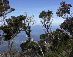 20060802_60 (Badly Drawn Dad) Tags: gunungkinabalu malaysia mys sabah beautifulmorning labanrata geo:lat=605821572 geo:lon=11656606257 geotagged descent downmtkinabalu