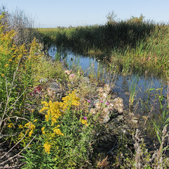 Go to WETLANDS to see goldenrods and thistles, if you are having a hard time finding them other places. (Tim Kiser) Tags: 2014 20140927 bayport bayportaccesssite bayportmichigan bayportlandscape fairhaventownship fairhaventownshipmichigan huroncounty huroncountymichigan huroncountylandscape img7379 lakehuronlandscape michigan michiganthumb michigansthumb saginawbay saginawbaylandscape saginawbaywetlands september september2014 thethumb thethumbofmichigan autumnflowers autumnwildflowers cloudlesssky eastmichigan eastcentralmichigan easternmichigan fallflowers fallwildflowers goldenrod largeshadow shadow sunny sunnylandscape sunnywetland thistle treeshadow wetland wetlandflowers wetlandlandscape wetlandplants wetlandwildflowers wildflowers unitedstates