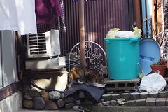 Today's Cat@2017-03-11 (masatsu) Tags: cat thebiggestgroupwithonlycats catspotting pentax mx1