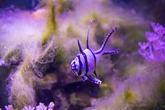 In a aquarium (Infomastern) Tags: fisk malmö malmömuseer malmöhusslott aquarium fish