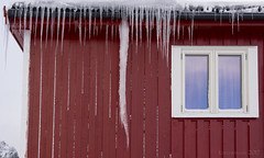that's one reserved for a special foe - HWW! (lunaryuna) Tags: norway lofoten rorbu fishermenhut winter season seasonalwonder windows norwegianwood roof icicles themotherofallicicles windowswednesday lunaryuna