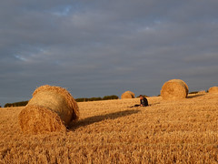Odd one out (Explore #372 18/8/15) (GillWilson) Tags: cumbria haybales gleaston