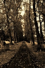 Old way (Sundornvic) Tags: road trees wild abandoned overgrown cemetery graveyard grass sepia way cross path stones graves memory avenue