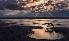 Exploring (Frank Busch) Tags: ocean dog reflection beach netherlands clouds evening denhaag pools bluehour eveninglight rayoflight frankbusch wwwfrankbuschname photobyfrankbusch frankbuschphotography imagebyfrankbusch wwwfrankbuschphoto