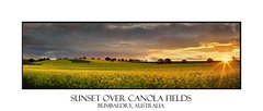 Canola farmlands as the sun sets (sugarbellaleah) Tags: travel flowers trees sunset vacation sky panorama orange plants sun sunlight green industry tourism nature beautiful yellow clouds rural season landscape spring scenery pretty farm australia nsw environment outback growing agriculture sunrays picturesque canola export farmlands canolaoil bumbaldry